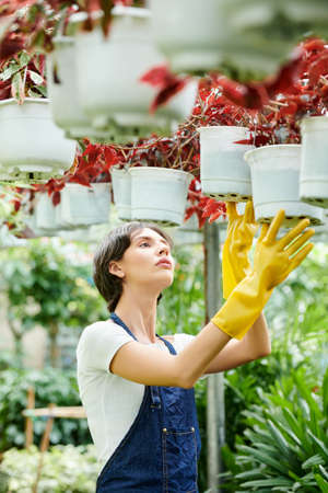 Pretty young woman working in greenhouse and growing various flowers for selling