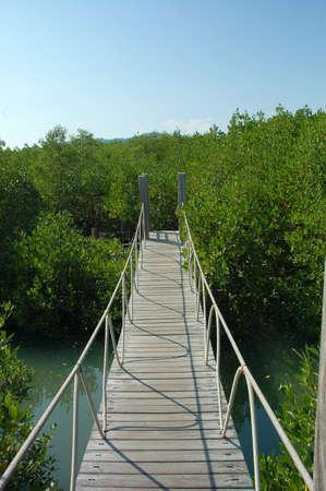 boardwalk trail: wooden boardwalk nature trail in a nature park  Stock Photo