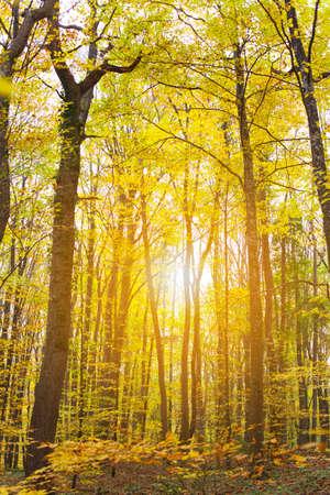 아름다운 녹색의 숲 스톡 콘텐츠
