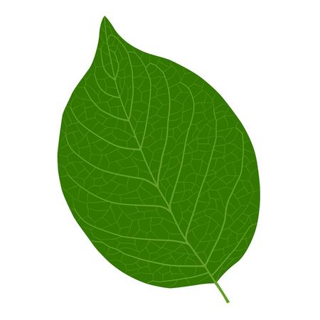 Lively leaf illustration material Foto de archivo - 117685243