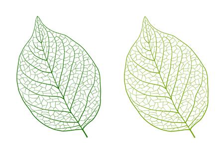 Lively leaf drawing illustration material Foto de archivo - 117685246
