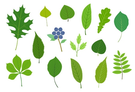 Lively Green leaf illustration material set