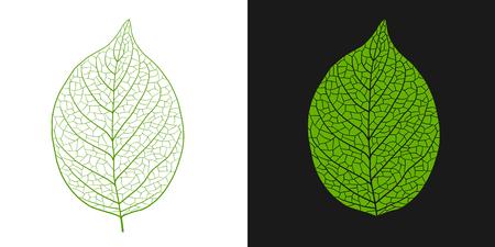 Leaf vein illustration set Foto de archivo - 117685307