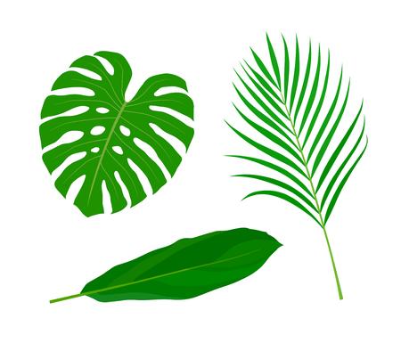 Tropical leaves illustration set