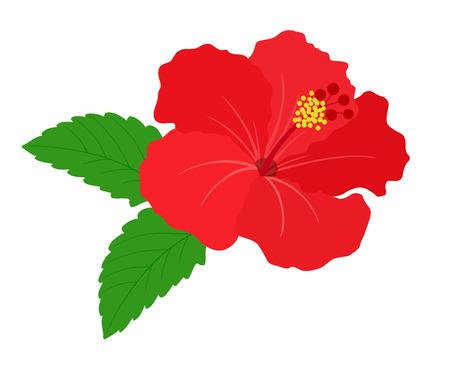 Tropical flower hibiscus 일러스트