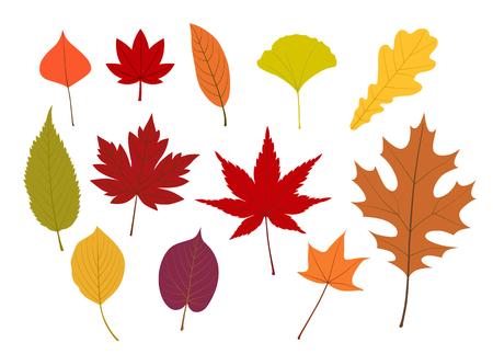 Colorful Autumn leaves illustration set