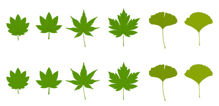 Set of maple leaves and ginkgo