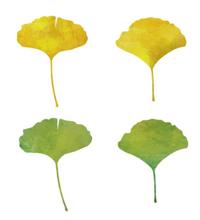 Ginkgo leaves icon (watercolor pencil)
