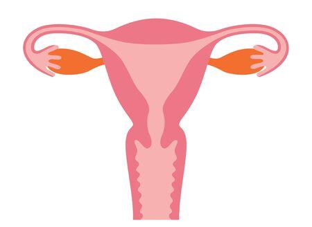 Uterus human figure illustration material and name (japanese), anatomical diagram