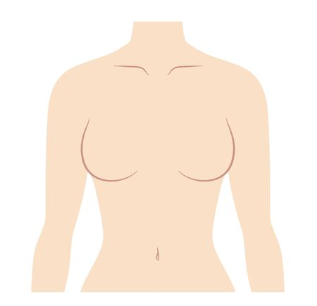 Illustration of female chest upper body