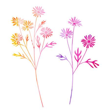 Flower of Margaret watercolor illustration set