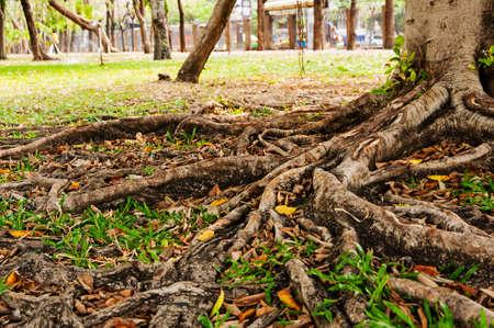provenance: Root Stock Photo