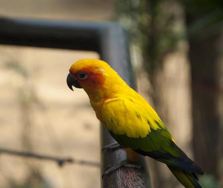 engaging: Sun Genoa Court Bird