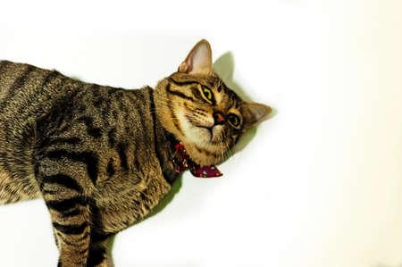 moggy: A cat portrait against  white background