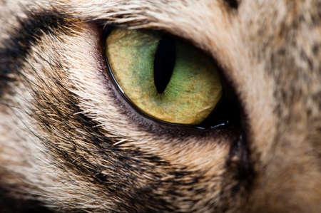 stargaze: Image cat eye closeup