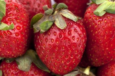 fresh strawberrys Stock Photo