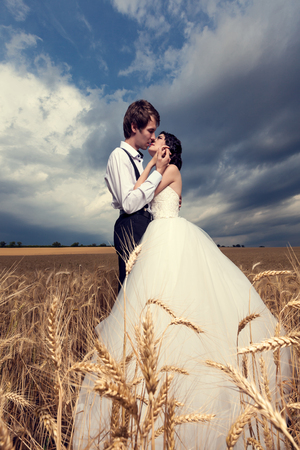 Kissing just married bride and groom in wheat field. Wedding  photography. Beautiful young couple in wheat field