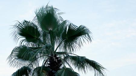 Palmier sur la plage tropicale au coucher du soleil. Ambiance estivale de détente