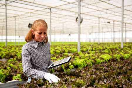 Female agronomist analyzing salad plants. Modern greenhouse