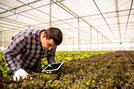 Researcher studies salad plants in the greenhouse. Tablet and greenhouse background Stock fotó