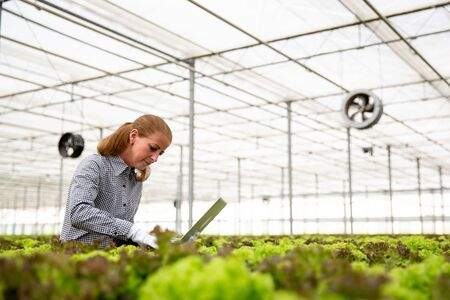 Researcher woman with a laptop in her hand surrounded by a lot of salad. Organic farming and modern greenhouse