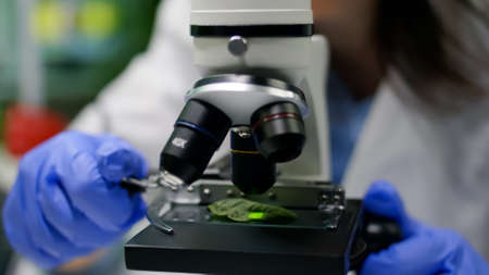 Closeup of biologist hands putting leaf sample under microscope analyzing genetic mutation on plant. Chemist specialist examining gmo test while working in pharmaceutical lab at ecology expertise