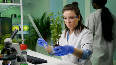 Botanist researcher measure sapling for botany experiment working in pharmaceutical laboratory. Biochemist scientist examining organic plants typing expertise information on computer Stockfoto