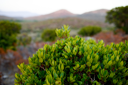 Close up of green plants on Corsica island, France, mountains landscape background. Horizontal view. Фото со стока