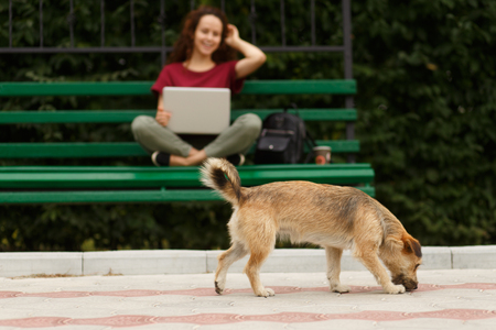 Side view of a little street dog, isolated on a blurry beautiful smilling young woman sitting on a bench, using laptop. Leisure time concept.