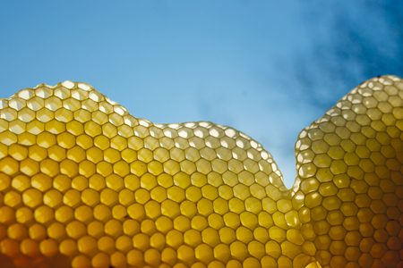 A few fragments of honeycomb in clear sunlight for clear sky background. Horizontal outside shot. Фото со стока