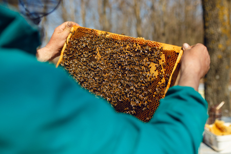 A beekeeper looking at a honeycomb, on hives background. Horizontal outside shot.