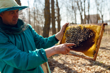 Beekeeper holds frame with honeycomb out of beehive. Horizontal outside shot.