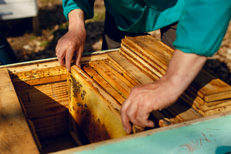 A beekeeper working and raised with honey from the hive. Horizontal outside shot. Фото со стока