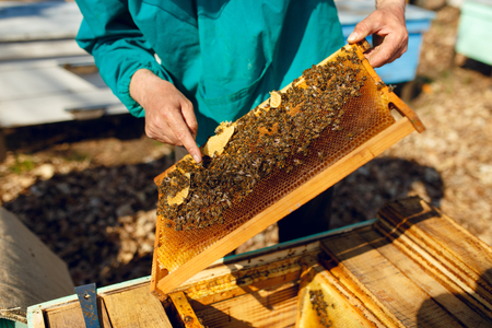 Cropped view of a beekeeper looking at a honeycomb, on hives background. Horizontal outside shot.