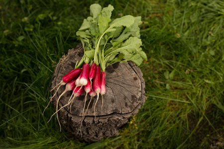 Bunch of radishes with green leaves isolated on green grass background. Organic vegetables concept.
