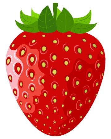 熟した果実の白い背景の上ベクトル ストロベリー  イラスト・ベクター素材