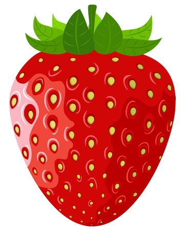 strawberry plant: Ripe berry a vector strawberry on a white background