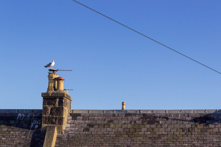 Seagull on the chimney of a house