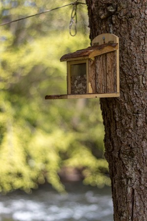 Bird feeder on a tree trunk