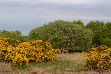 Scotstown Moor in Aberdeen, Scotland