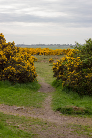 Scotstown Moor Path in Aberdeen, Scotland