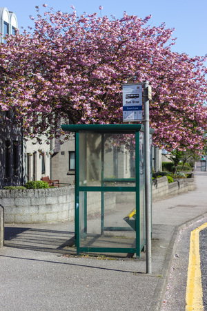 Colourful Blossom around a bus stop, Aberdeen Scotland Stockfoto