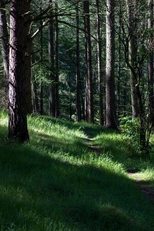 Scottish woods in Bennachie, Aberdeenshire