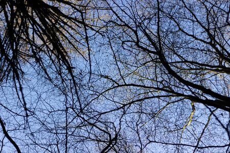 Leafless tree canopy aginst a blue sky