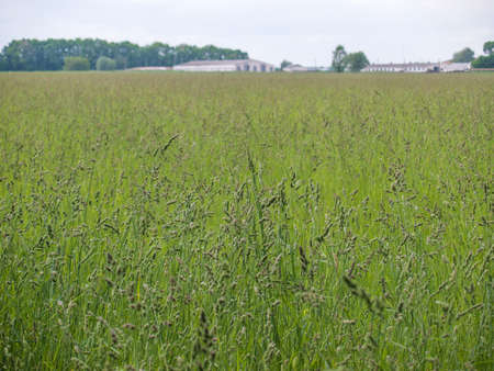 green land: Meadow on a cloudy day with farm barns on the background shallow depth of field