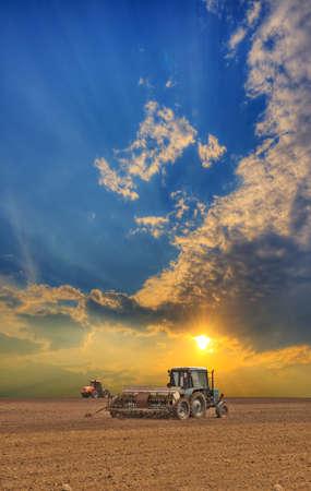 cosecha de trigo: Tractores cultivar el campo en la puesta del sol