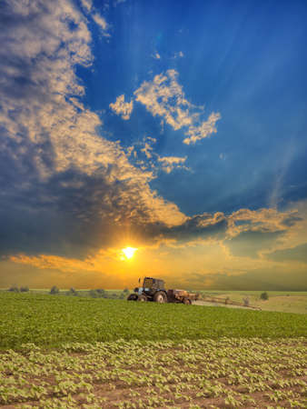 agricultural farm land: Tractor spraying the field on sunset in summer
