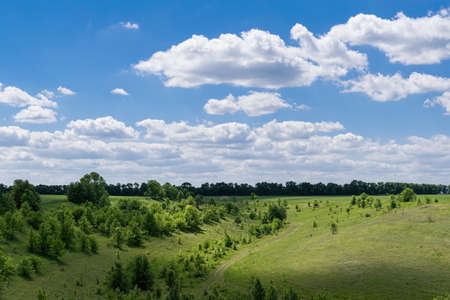 Summer rural landscape with windy weather with some clouds in the sky