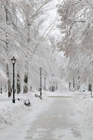 Public park covered with thick layer of fresh snow in winter