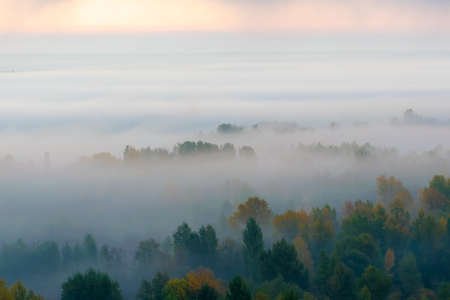 Tops of the trees covered with thick fog in the valley